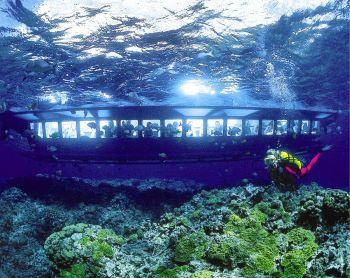 See St. Maarten's underwater marine life